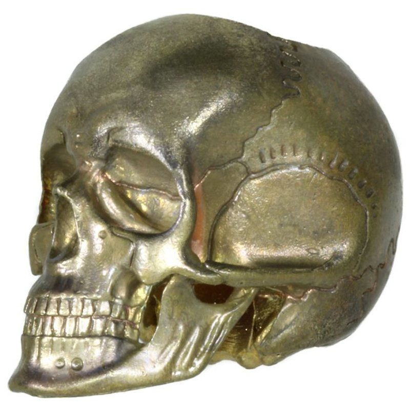 Anatomical Skull (Large) In Brass By Techno Silver